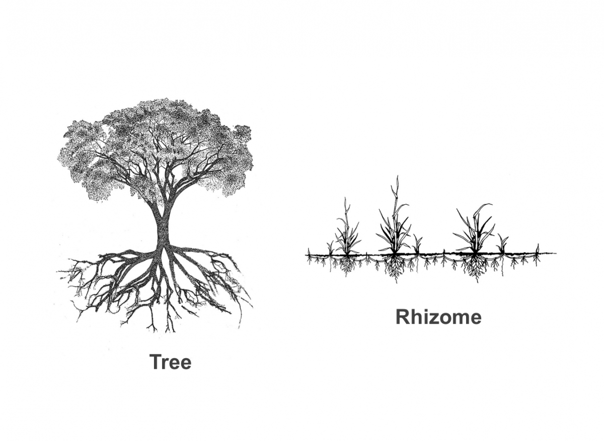 A tree and a rhizome next to each other.  You see the hiearchy/verticality of the tree, and the horizontality of the rhizome.